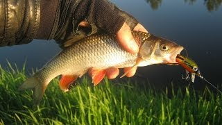 Рыбалка на Угре. Голавль, окунь на спиннинг. / Spin Fishing on Ugra River. Perch & Chub. 2014.05.11..
