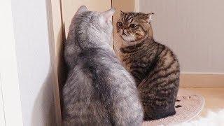 루루와 티티 고양이가 결국 한판 붙었어요