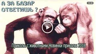 Приколы с животными Новинки приколы 2016.Смешное видео