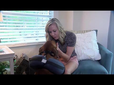Women Find Drunk Stranger Cuddling With Dog from YouTube · Duration:  1 minutes 25 seconds