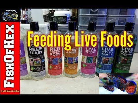 Feeding Live Foods & Preparing For A Mandarin Goby | 300 Gallon Reef