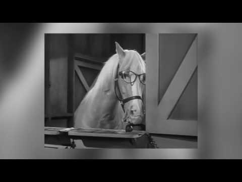 Mr Ed The Talking Horse The Empty Feed Bag Blues from YouTube · Duration:  1 minutes 3 seconds