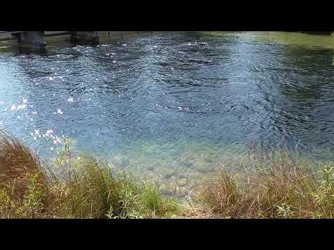 Platte river salmon, Michigan 2017