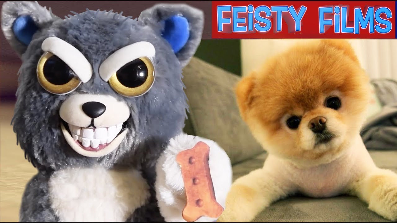 Feisty Pets vs. Real Animals Compilation! Vol. 1
