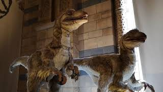 Dinosaurs at The Natural History Museum - VID 20180804 150922