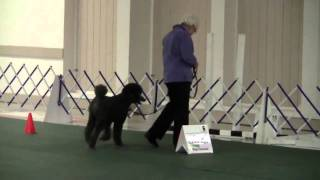 Cantope Poodles Rally Obedience Trial  Sterling Run#1