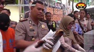 Penyelundupan Satwa Dilindungi Berhasil Digagalkan Polres Pelabuhan Tanjung Perak