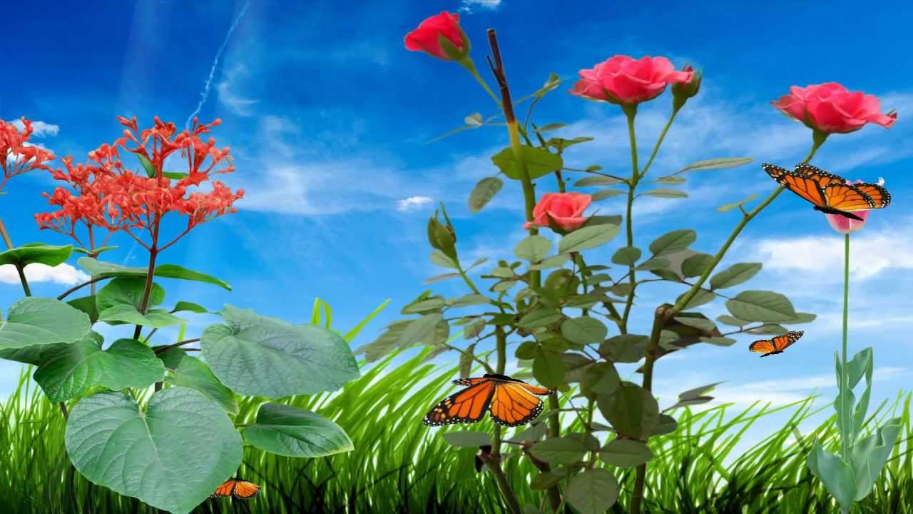 Morning Flower Animated Wallpaper Desktopanimated