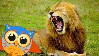 Животные Африки для детей - Учим голоса и звуки. Развивающее видео