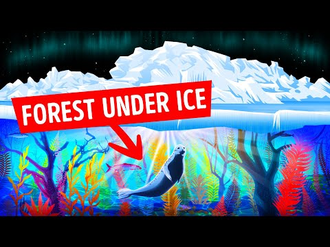 VIDEO: Scientists Found Forests Under the Arctic Ice, They Were Shocked