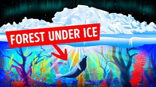 Scientists Found Forests Under the Arctic Ice, They Were Shocked