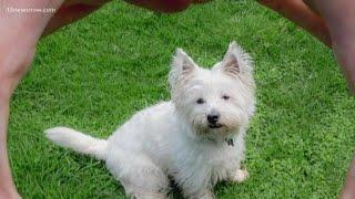 BENTLEY'S CORNER: Pet potty training