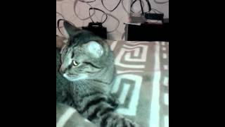 Кота тошнит от звука