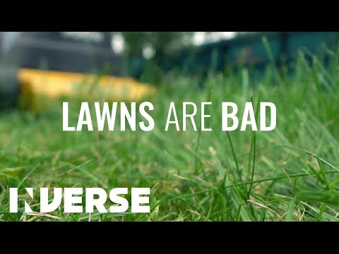 Why Lawns Are Bad According to Science | Inverse