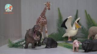 King Kong, King Kong Facts, King Kong Cartoon, Giraffe, Giraffe Facts