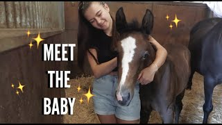 WE HAVE A NEW FOAL | vlog
