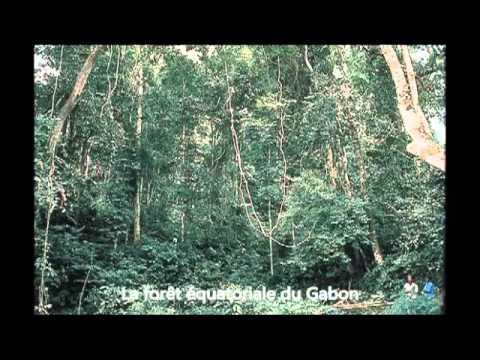 Voyage au Gabon : Galerie photos d'Easyvoyage