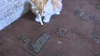 Как отучить кота от курения?