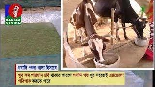 Shamol Bangla   Ep 536   কৃষিবিষয়ক অনুষ্ঠান শ্যামল বাংলা   Reza Islam   BanglaVision Program   2019