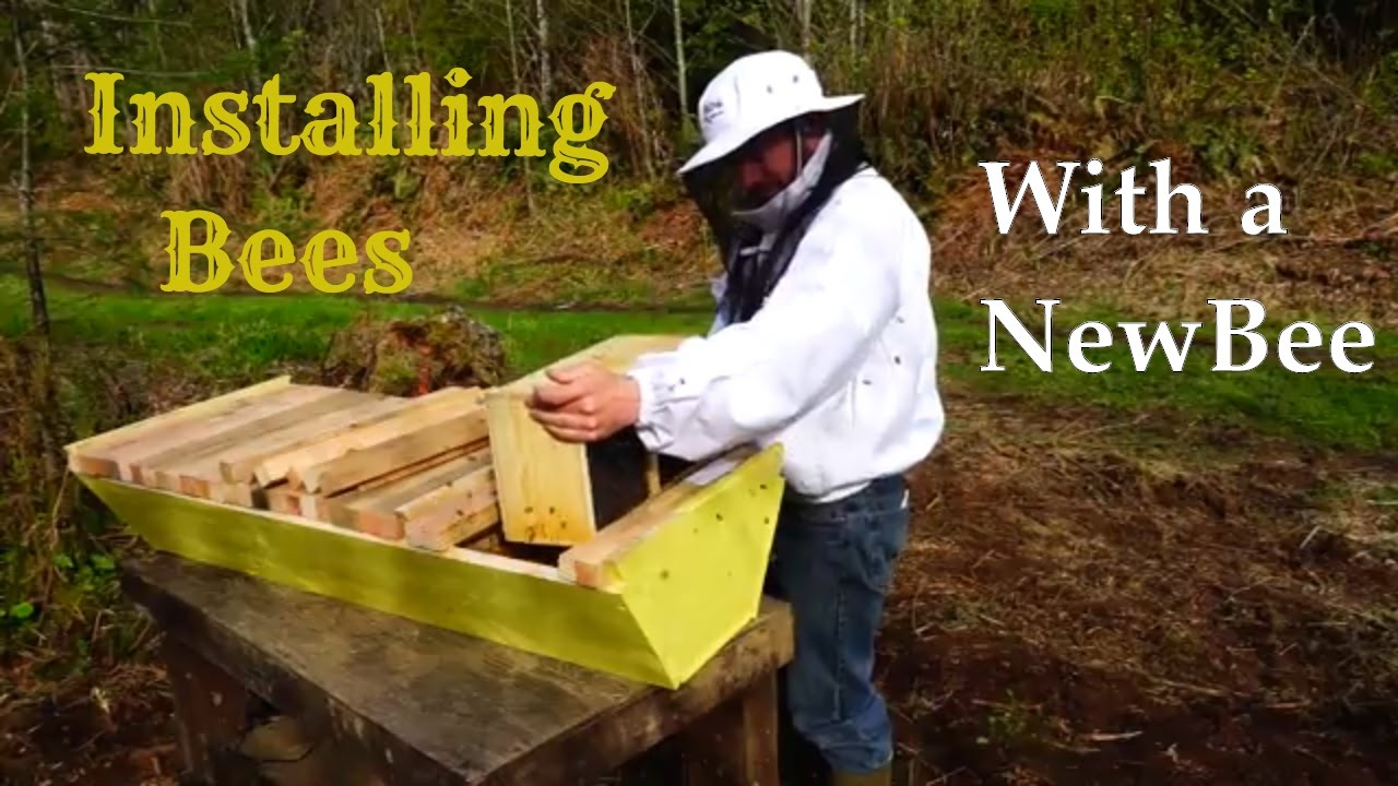 Homestead Beekeeping: Installing Bees In A Homemade Top Bar Hive