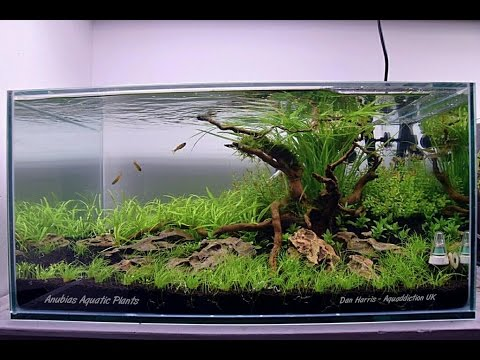 Aquascape - 'New Beginnings' - Step by Step - Aquascaped by Dan Harris #PoweredByAnubias
