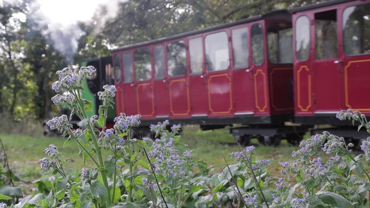 Steam - Bressingham Steam & Gardens