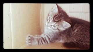 Hunter the girl   kitty clips