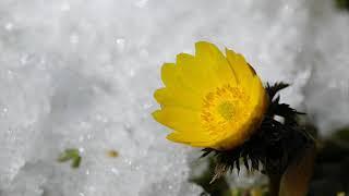 冬から春へ 21歳 麻丘めぐみさんの美しい歌声です。 春の訪れをお楽しみ...