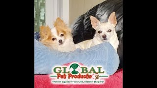 dog products online right Now dog products online