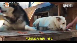 ♥Cute Dogs and Cats Compilation 18 cute cute