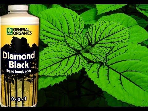 Organic America Grow With General Organics Nutrients Royal Oak MI