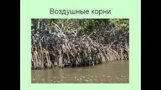 Виды и типы корней.AVI