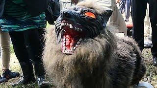 イノシシなどから農作物を守るためにJA木更津市はオオカミ型のロボッ...
