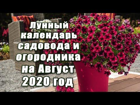 ЛУННЫЙ КАЛЕНДАРЬ САДОВОДА-ОГОРОДНИКА НА АВГУСТ 2020