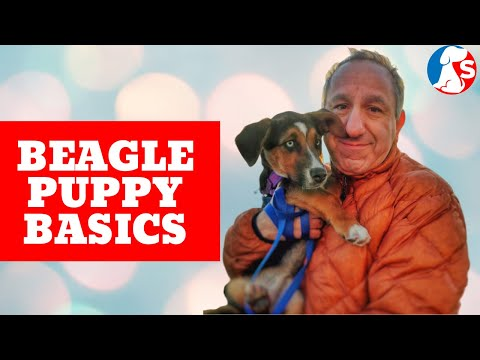Saro Puppy Training Course Intro and Limited Time Special from YouTube · Duration:  8 minutes 15 seconds