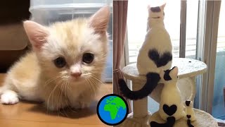 Animal World 🌍 Cute and Funny Animals Video Compilation 2019