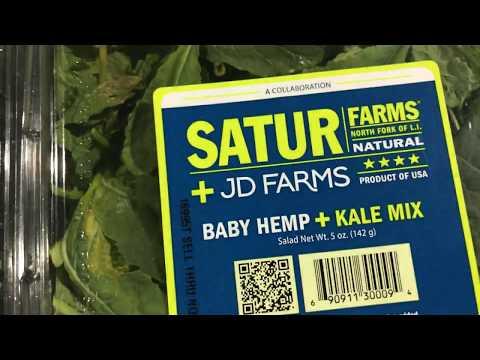 Hemp Mentor opens Hemp Salad 🍁 (2017)