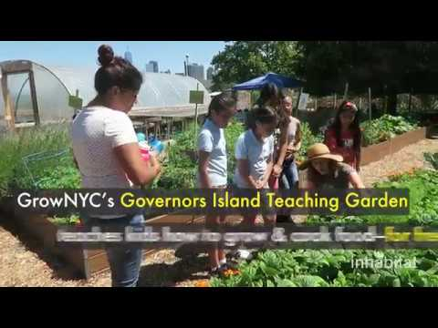 Inspiring urban farm teaches kids how to grow organic food o