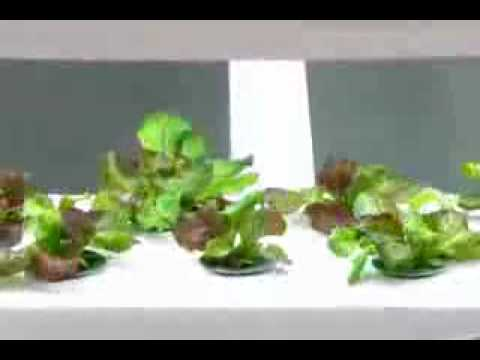 aerogarden reviews 2015