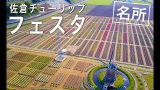 佐倉市 関東最大級・約100種類67万本のチューリップが、オランダ風車を...