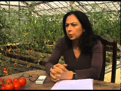 """გეოთერმული წყლები - Geothermal Waters - გადაცემა """"ეკოვიზია"""" - 'Ecovision' TV Show"""