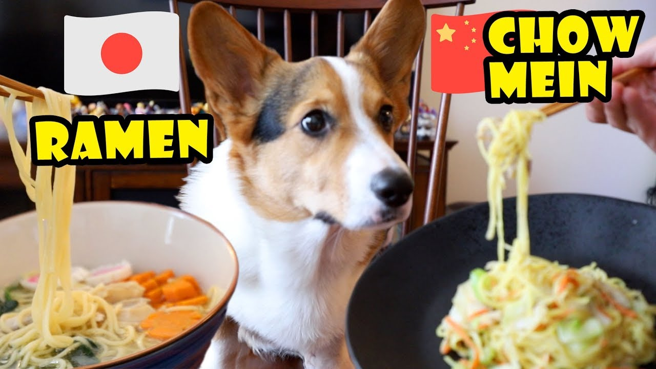 ramen-or-chow-mein-what-does-the-corgi-dog-like-to-eat-life-after-college-ep-619