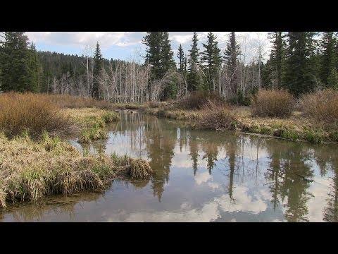 Fishing Duck Creek, Utah, Dixie National Forest