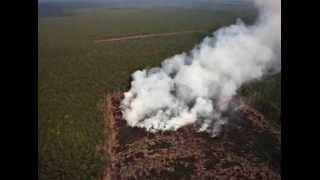 Land Grabbing and Deforestation for Palm Oil