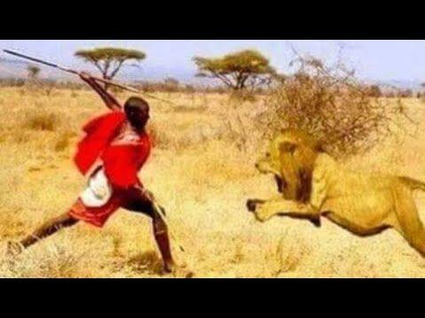 MAASAI BRAVE MEN KILLING A LION USING A SPEAR WOW!