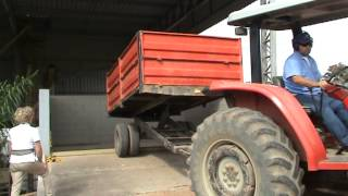 Unloading coffee berries in the silo teo be processed as natural and pulped natural @ coffee f