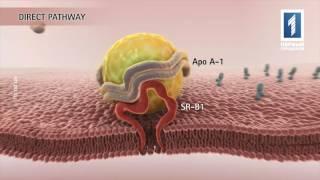 видео Метаболизм жиров (липидный обмен) в организме