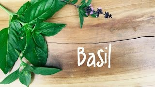 How to Grow Basil | IN BETH'S GARDEN