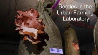 Beetles in the Underground Urban Farming Laboratory, Zurich