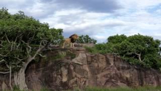 Lion Gangland